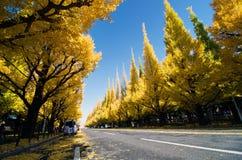 Ginkgoträdaveny som ner heading till det Meiji Memorial Picture Get arkivbild