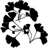 Ginko Biloba Silhouettes Royalty Free Stock Photography