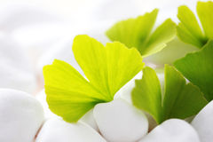 Ginko leaves. Green ginko leaves with white stones - beauty treatment Royalty Free Stock Photography