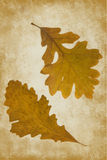Ginko leaves in Autumn Stock Photos