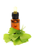 Ginko oil. Bottle of ginko oil and fresh ginko leaves - beauty treatment Royalty Free Stock Image