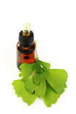Ginko oil. Bottle of ginko oil and fresh ginko leaves - beauty treatment Stock Photos