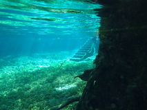 Ginnie Springs Royalty Free Stock Image