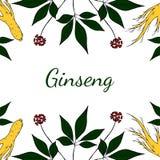 Ginsém, fundo gorizontal na cor Imagens de Stock Royalty Free