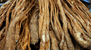 Ginseng Stock Photography