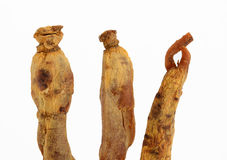 Ginseng Royalty Free Stock Image