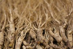 Ginseng. Is a chinese medical herb used for medical purposes Royalty Free Stock Photography