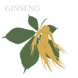 ginseng Immagine Stock