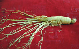 Ginseng Royalty Free Stock Images