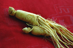 Free Ginseng Royalty Free Stock Photo - 6411685