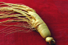 Free Ginseng Stock Photography - 6445512