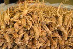 ginseng Foto de Stock Royalty Free
