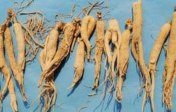 Ginseng chino de la medicina herbaria Fotografía de archivo