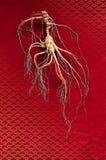 Ginseng de fines herbes Photos libres de droits