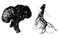 Ginseng e ganoderma lustroso Ilustração do Vetor