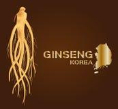 Ginseng, ginseng de Corea, medicina tradicional antigua Fotografía de archivo