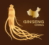 Ginseng, ginseng della porcellana, medicina tradizionale antica Immagini Stock