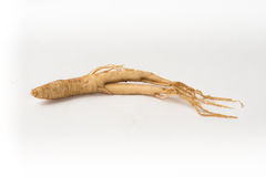 Ginseng herb on white background Stock Photography