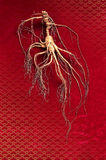 Ginseng herbal. A piece of high medicine value of ginseng Royalty Free Stock Photos