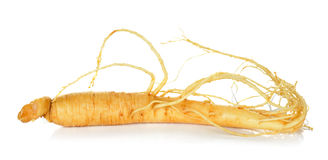 Ginseng isolated on the white background Royalty Free Stock Photography