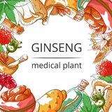 Ginseng medical plant frame background royalty free illustration