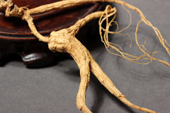 Ginseng root Stock Image