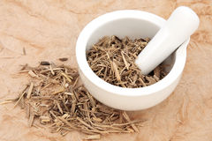 Ginseng. Root herb in a mortar with pestle and loose over papyrus background Stock Photography