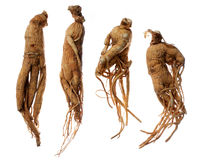 Ginseng Roots Royalty Free Stock Images