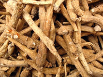 Ginseng roots from Chinese herbal pharmacy Stock Photos