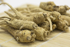 Ginseng roots Royalty Free Stock Image