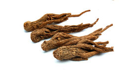 Ginseng rosso Immagine Stock
