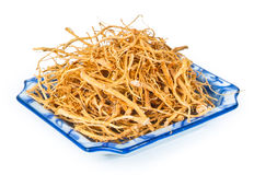 Ginseng secado no fundo foto de stock royalty free