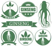 Ginseng. Vector illustration (EPS 10 Stock Image
