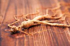 Ginseng on the wood background Stock Image