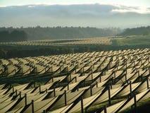 Ginsenglantgård med skyddande skugga fotografering för bildbyråer