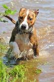 Giocando in acqua Fotografia Stock Libera da Diritti
