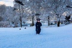 Giocando con gli uccelli nell'inverno fotografie stock