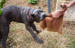 Giocando con il cane Fotografia Stock Libera da Diritti