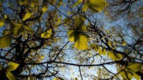 Giocando con il colore e la luce Fotografie Stock