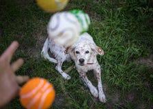 Giocando con il vostro cane Fotografie Stock