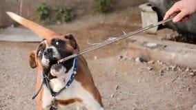 Giocando con un cane sulla via stock footage