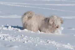 Giocando con una neve Fotografia Stock Libera da Diritti