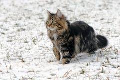 Giocando nella neve dà il piacere Fotografia Stock Libera da Diritti