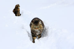 Giocando nella neve dà il piacere Immagine Stock
