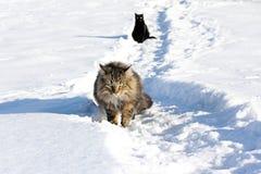 Giocando nella neve dà piacere Immagine Stock