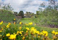 Giocatore di golf di fine settimana fotografia stock libera da diritti
