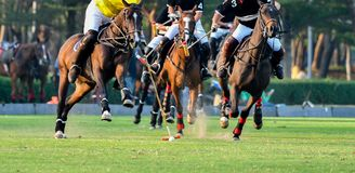Giocatore di polo del cavallo Immagine Stock