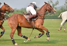 Giocatore di polo del cavallo della donna Fotografie Stock