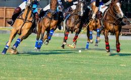 Giocatore di polo e dei cavalli Immagini Stock Libere da Diritti
