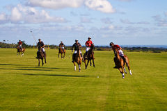 Giocatore maschio di polo Fotografia Stock